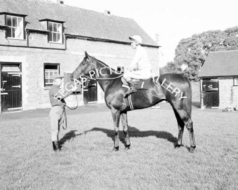Racehorse Craighouse